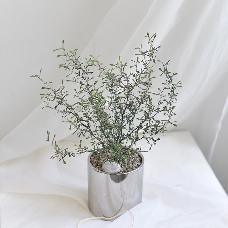 식물미감 (植物美感)