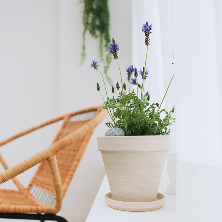 식물 일기 : Daily life with plants