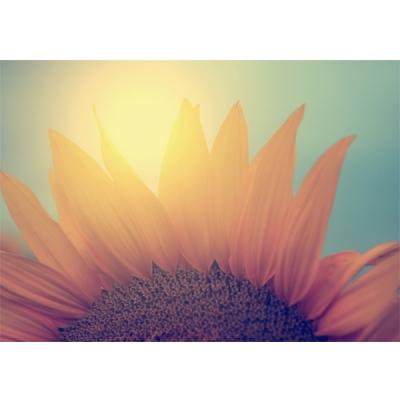 해바라기의 꽃잎을 세다 - 폼보드 감성사진 액자