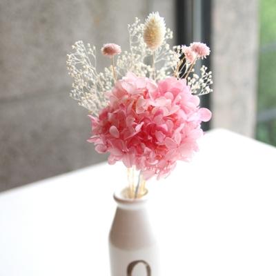 핑크수국미니부쉬