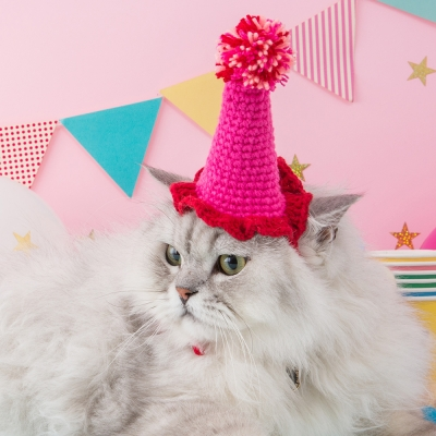 생일축하 꼬깔모자 강아지꼬깔모자 고양이꼬깔모자