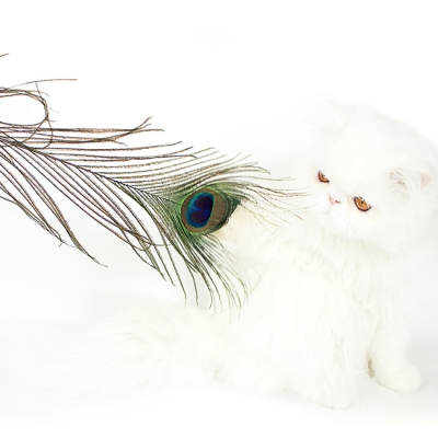 PEACOCK FEATHER HUNTING TOY
