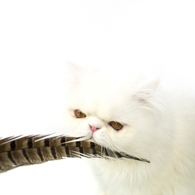 PEASANT FEATHER HUNTING TOY
