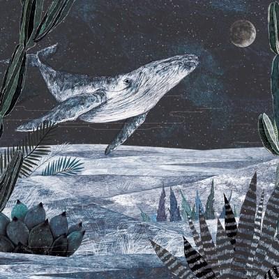 별의 바다 일러스트 엽서