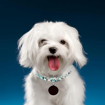 강아지 반려견 대형견 인식표 네임택 목걸이 올쉐이프 매듭-믹스1