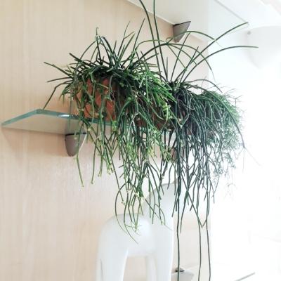 Paradise(L) 공중식물 1종 에어토분완성품+ 마크라메행잉
