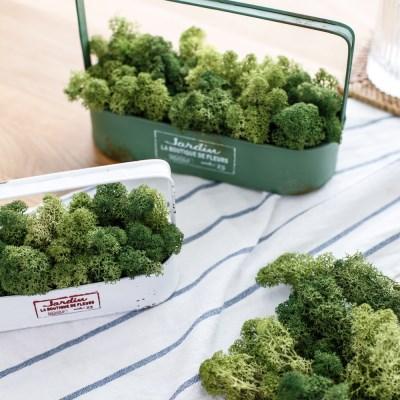 천연이끼 공기정화 식물 그린 스칸디아모스 단품 25g