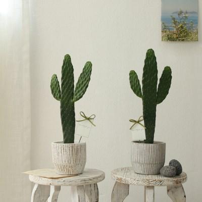 [plant] 응원해요 대박선인장 화분set [2color]_(595309)