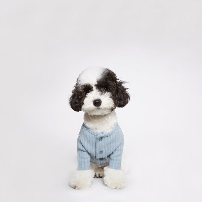 Maple knit cardigan (Cream soda)