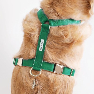 GREEN RAY GOLD HARNESS