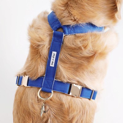 BLUE MOON GOLD HARNESS