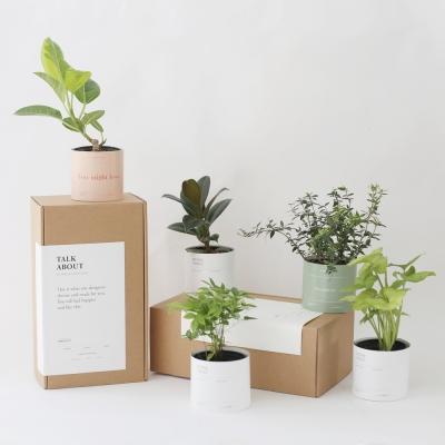 공기 정화 식물 1+1