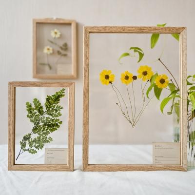 식물표본 압화 투명 액자-오크우드 나무 5x7,A4