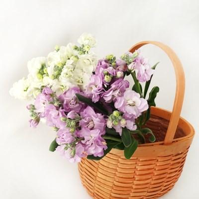 휘핑크림처럼 부드럽고 달달한 꽃, 러블리스톡
