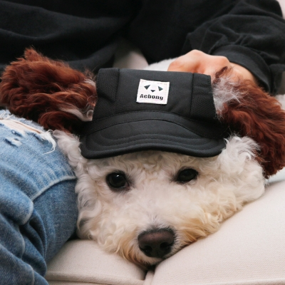 강아지 모자