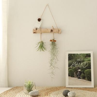 공기정화식물 - 틸란드시아 행잉플랜드set (미니)_(634732)