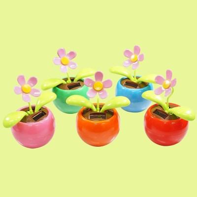 태양열 꽃 화분 노호혼