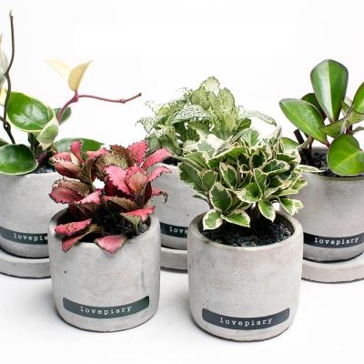 책상에 놓기 좋은 실내공기정화식물 미니시멘트화분