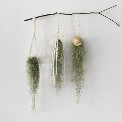 [공기정화]마크라메 공기정화 식물 수염 틸란 HM