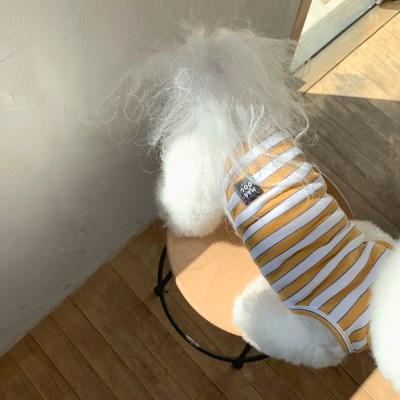 [T.탐스스트라이프민소매]Toms stripe sleeveless T_Yellow