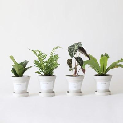 공기정화 4종식물