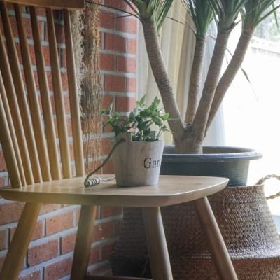 실내공기정화식물 아이비(그린)