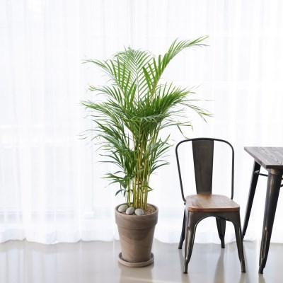 플라랜드 대형 독일토분 아레카야자 공기정화식물(서울/경기)