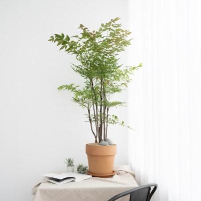 플라랜드 남천나무 토분 인테리어화분