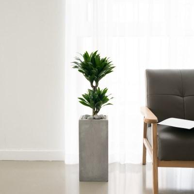 플라랜드 공기정화식물 콤펙타 시멘트화분 인테리어화분