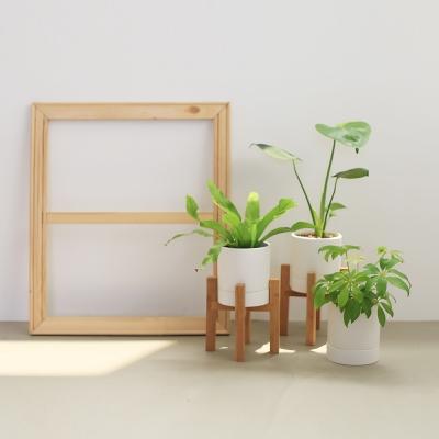 키우기 쉬운 식물 4종