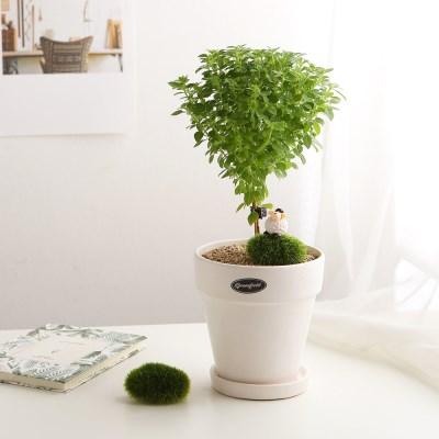 공기정화식물_바질트리+피규어