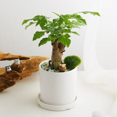 공기정화식물_녹보수+피규어