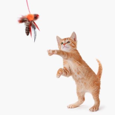 뽀시래기 고양이 마약 낚시대 장난감_(1347427)