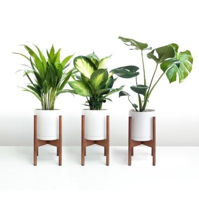 holiday 청량감 넘치는 공기정화식물 + 원목 스탠드