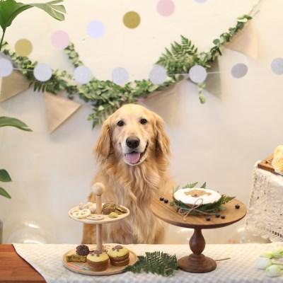 [그냥,점례] 강아지 생일파티 6종 선물세트
