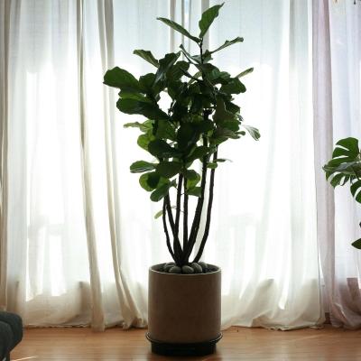 모던인테리어 특대형 식물
