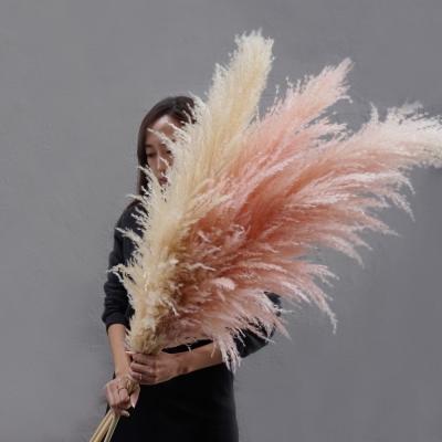 프리저브드 팜파스 - 대형갈대/ 핑크갈대/ 이탈리아갈대