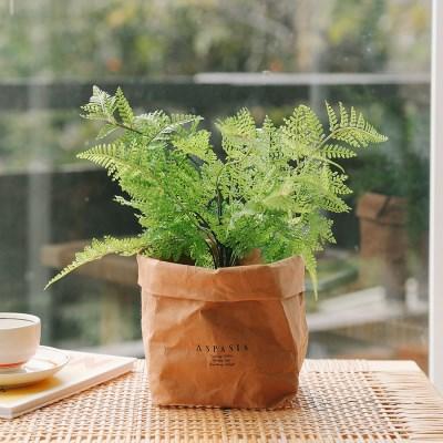 푸엘라 고사리 미니조화나무-실내인테리어,조화식물,화_(100852031)