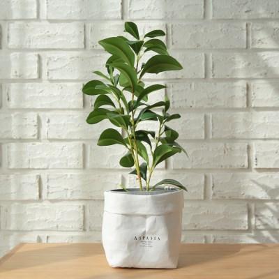 베리타스 크루시아 미니조화나무-실내인테리어,조화식물_(100852027)