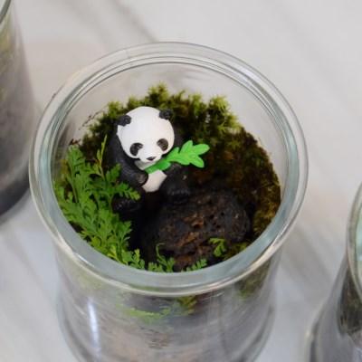 이끼테라리움 귀여운 팬더곰