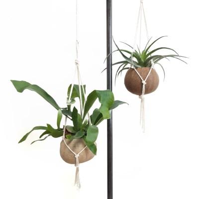 Chandelier 공중식물 코코넛 행잉화분