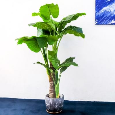 데코 나무 조화 화분 (알로카시아)_(1488755)