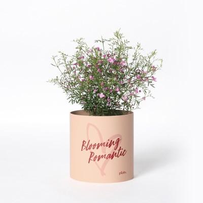 로맨틱 에디션 / S + 보로니아 피나타