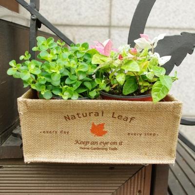 ��Ʋ ���� ��Ʈ Ʈ���� S - Leaf