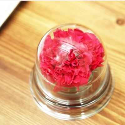 [더봄] 아크릴돔_카네이션 (HOT PINK) / 선물용