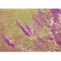 라벤더의 향기 - 감성사진 폼보드 액자