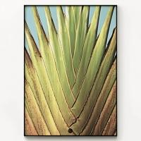 메탈 보테니컬 식물 인테리어 포스터 액자 Banana tree