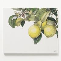 캔버스 보타니컬 북유럽 식물 그림 대형 액자 레몬