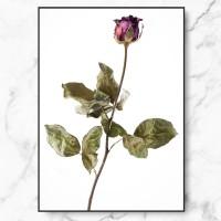 [RYMD] 북유럽 인테리어 식물 액자 집들이 선물 드라이 플라워 로즈