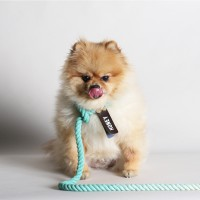 SMARTLEASH_MINT